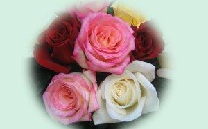 roses-bouquet-3566