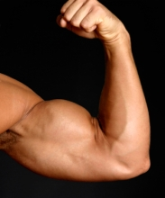 arm muscle